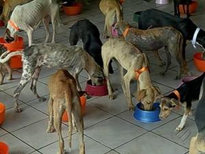 Cães Santa Cruz do Arari Doações Resgatados Belém Pará (Foto: Reprodução/TV Liberal)