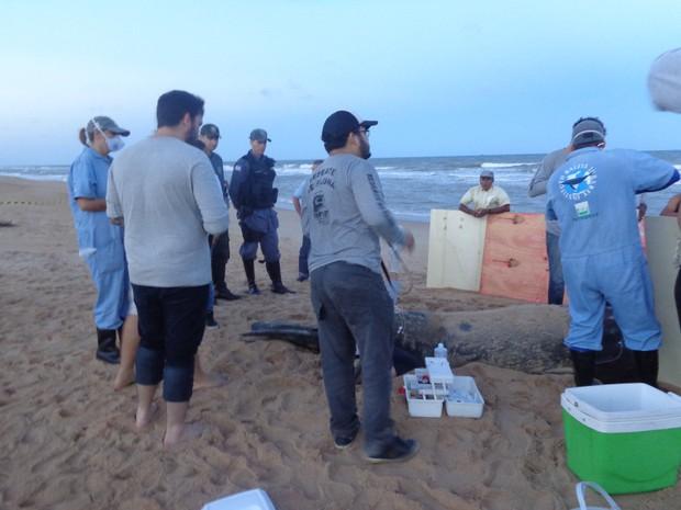 'Fred' é recolhido de praia em São Mateus (Foto: Divulgação/ Sesp)