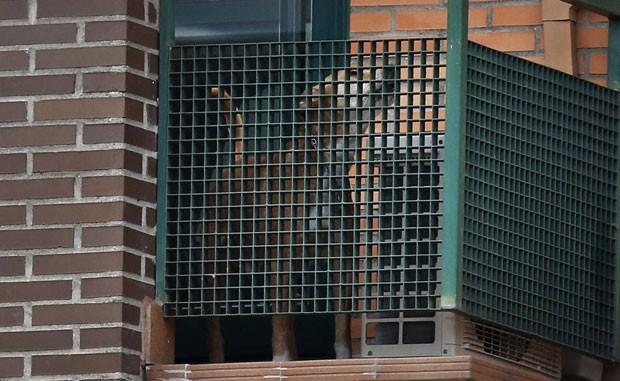 O cachorro Excalibur, da enfermeira espanhola infectada com ebola, é visto na casa da família nesta quarta-feira (8). Autoridades locais querem sacrificar o animal (Foto: Susana Vera/Reuters)