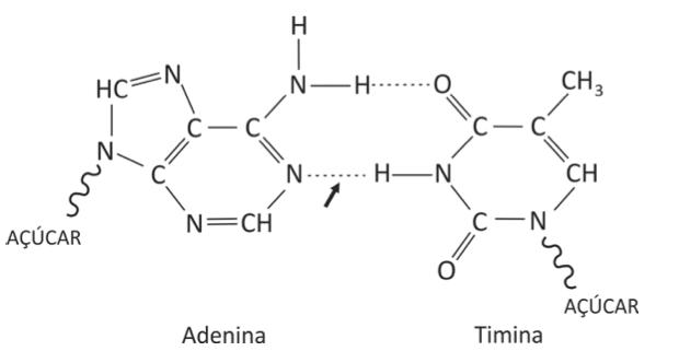 Bases nitrogenadas (Foto: Reprodução/Fuvest)