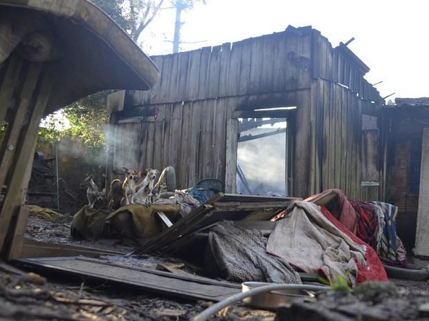Idosa fica em estado grave e 9 cães morrem após casa pegar fogo em SC