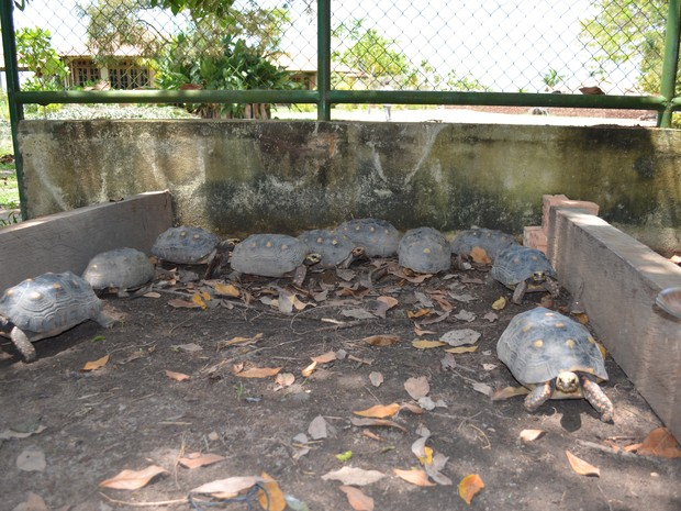 Jabutis foram entregues no Bosque dos Papagaios (Foto: Vanessa Lima/G1 RR)