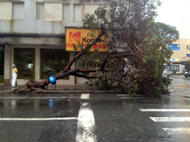 Árvore caiu entre as ruas Rio Grande do Sul e Prefeito Chagas (Foto: Jéssica Balbino/ G1)