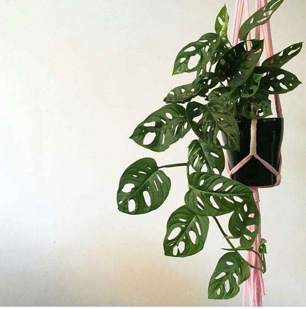 6 dicas básicas para cuidar das plantas no verão (Foto: Divulgação)