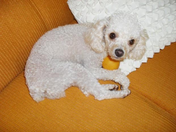 Cão foi socorrido em outra clínica, onde exames apontaram traumatismos (Foto: Arquivo Pessoal)
