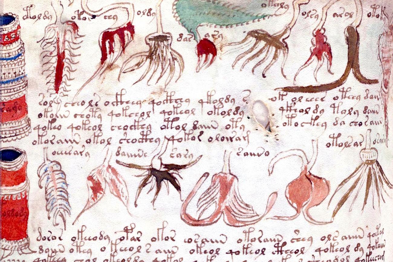 Página do Manuscrito Voynich (Foto: Reprodução)