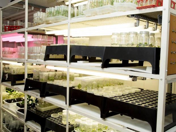 Laboratório de Genômica e Biologia Molecular de Plantas (Foto: Gerhard Waller/Esalq)