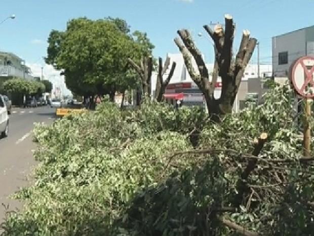 Árvores ficaram sem folhas e galhos em Jales (Foto: Reprodução/TV TEM)