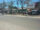 Rebanho de gado foge de chácara e atrapalha o trânsito em avenida