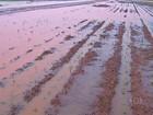 Chuva em Mato Grosso atrasa o plantio da safra de algodão