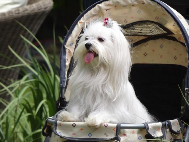 Emily faz charme em seu carrinho (Foto: Salve Jorge/ TV Globo)