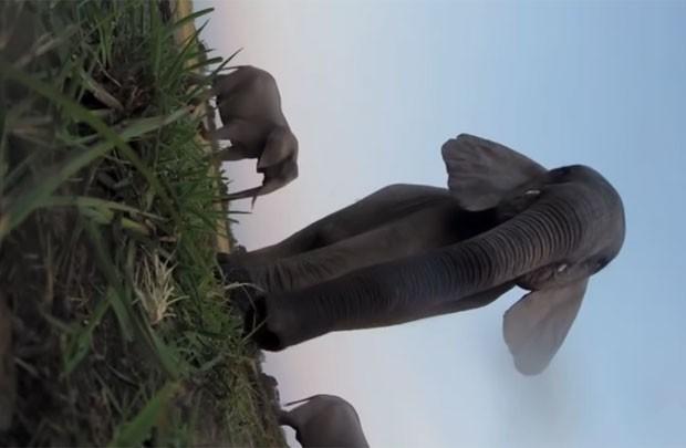 Dois elefantes foram vistos pisando sobre o equipamento (Foto: Reprodução/YouTube/Wilderness Safaris )