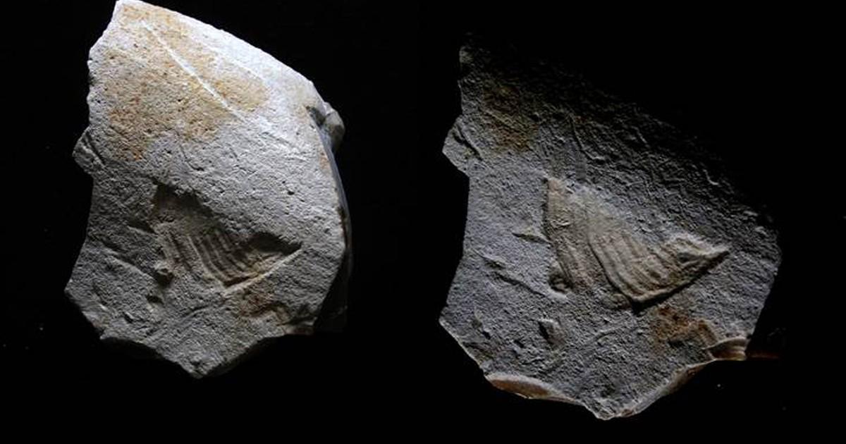 Arqueólogos descobrem pássaro esculpido em rocha há 35 mil anos