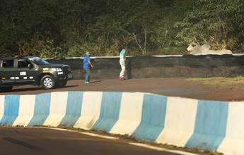 Boi aparece no circuito de Cascavel  e mobiliza segurança da Stock Car