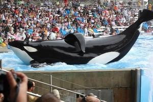 Diversão? Ativistas questionam a finalidade de parques de entretenimento com animais como o Seaworld (Foto: Divulgação)
