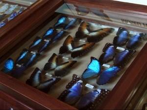 Coleção de Borboletas no museu Fritz Plaumann (Foto: Portal de Turismo Seara/Divulgação)