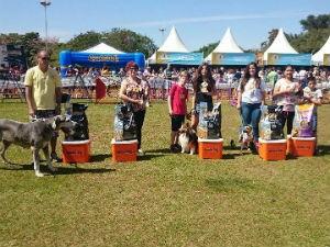 Cães foram premiados em cinco categorias diferentes (Foto: Renata Marconi/G1)