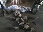 Polícia apreende 59 quelônios em porto na Zona Oeste de Manaus
