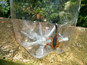 Moradores afirmam que escorpiões aparecem dentro das casas (Foto: Cláudio Nascimento / TV TEM)