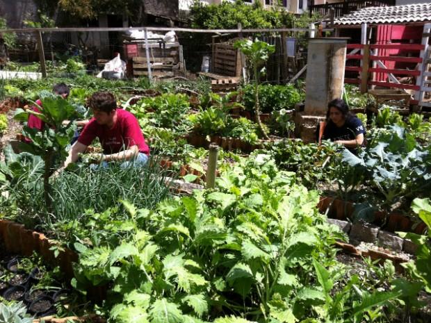 Agricultura urbana desenvolvida na Casa da Videira, em Curitiba (Foto: Thais Kaniak / G1)
