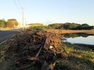 Restos de podas de árvores são deixados às margens da lagoa (Foto: Silvana Santos/VC no G1)