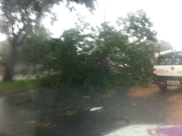 Internauta registrou queda de árvore em trecho da Avenida Beira-Rio próximo à Ponte Sérgio Motta. (Foto: Higo Marques)