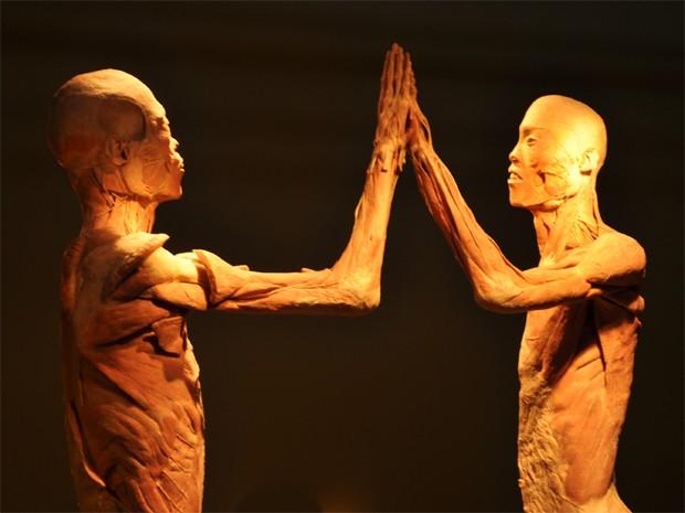 Exposição 'O Fantástico Corpo Humano'  (Foto: Divulgação / Francisco Lorentz)