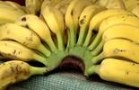 Rota do Sol ensina a fazer três receitas saborosas com banana > saiba mais