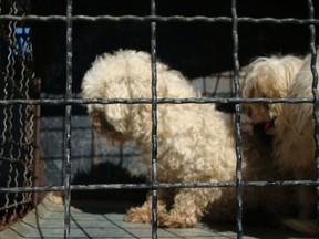 Cães maus-tratos (Foto: Patrícia Tomasi/Divulgação Diretoria Bem-Estar)