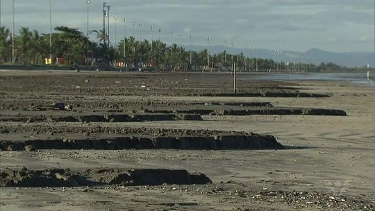 Crustáceos aparecem mortos após 'mar de lama' em praia do litoral de SP