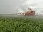 Desenvolver a produção de maneira sustentável é desafio no Pantanal