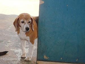 Cão Gabriel foi sacrificado em março de 2012 (Foto: Arquivo pessoal)
