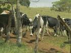 Furtos a gado crescem 37,7% entre janeiro e setembro no Sul de Minas