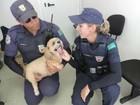 Cão é resgatado após ficar trancado em carro sob sol de 40º C em Jundiaí