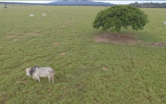 Imóvel da massa falida das Fazendas Reunidas Boi Gordo (Foto: Divulgação/Lut)
