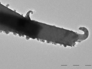 Pesquisadores da UFSCar e Unesp sintetizaram o tungstato de prata por um processo novo (Foto: Elson Longo/Arquivo pessoal)