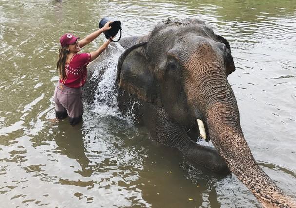 Observar elefantes na Tailândia (Foto: Reprodução)