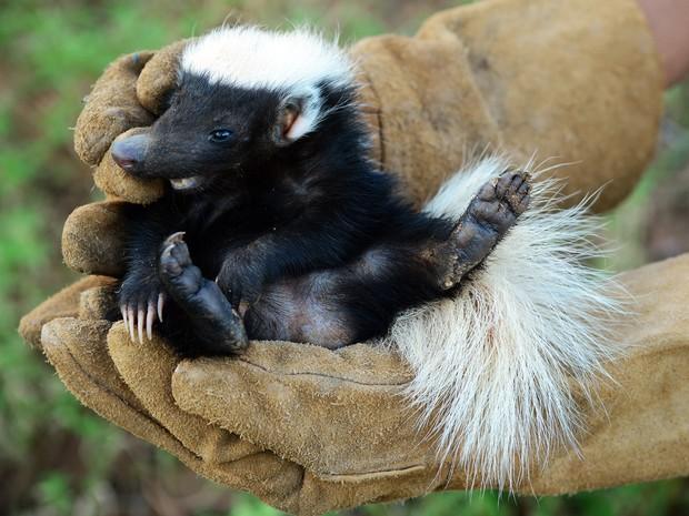 Livro registra resgate de animais da Caatinga (Foto: André Pessoa/Arquivo pessoal)