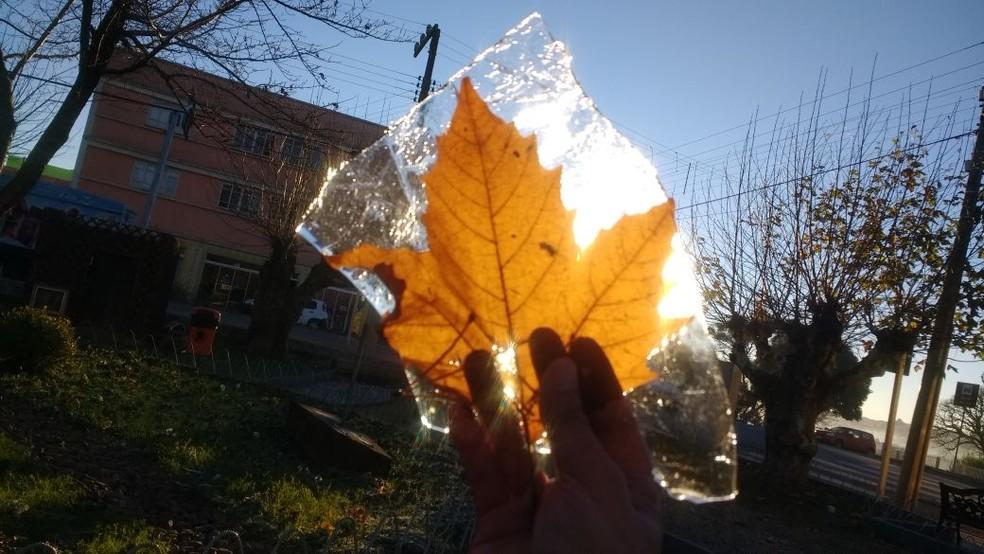 Folha congelou com temperatura negativa em São Joaquim (Foto: Mycchel Hudsonn Legnaghi/São Joaquim Online)