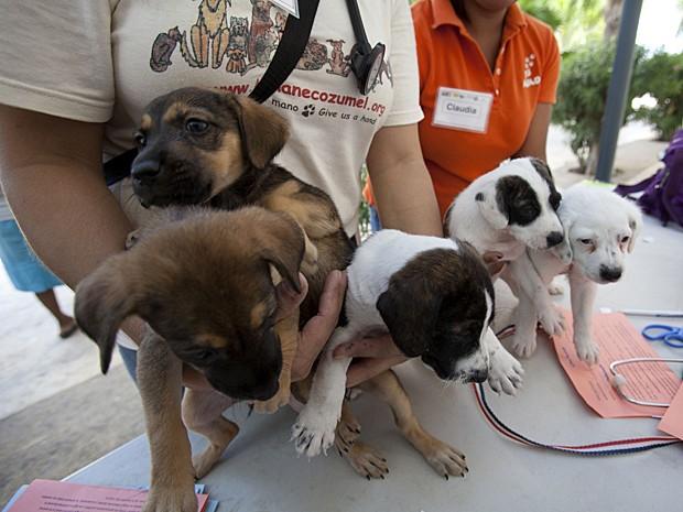 Cães (Foto: Victor Ruiz Garcia/Reuters)