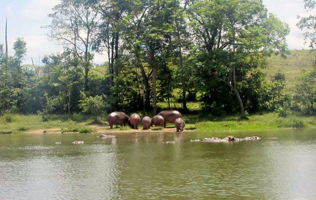 Hipopótamos Escobar (Foto: Leandra Felipe/G1)