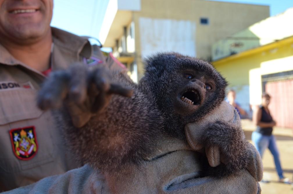 Macaco foi resgatado sem ferimentos pelo Corpo de Bombeiros de Vilhena (Foto: Eliete Marques/G1)