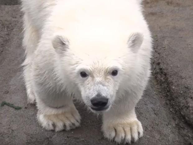 Nora com dez meses, em vídeo divulgado em 10 de agosto pelo Columbus Zoo (Foto: Reprodução/Youtube/Columbus Zoo)