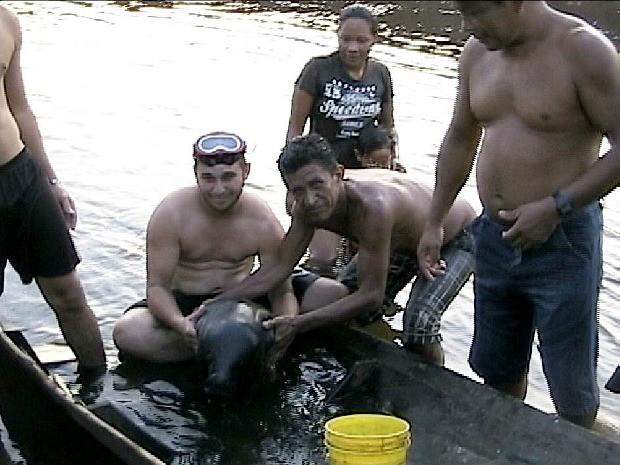 Peixe-boi foi encontrado por banhistas (Foto: Adauto Silva/TV Amazonas)