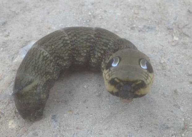 Criatura curiosa fotografada pelo britânico Edward Wharton no quintal de sua casa (Foto: Reprodução/Facebook/Edward Wharton)