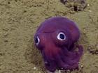 Mergulhadores encontram lula 'que parece Pokémon'