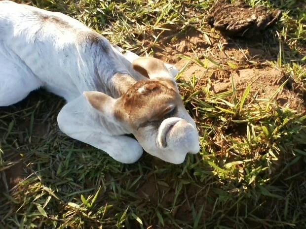 Animal nasceu sem o nariz e com olhos escondidos, segundo o dono (Foto: Marcos Antonio Reis/Arquivo Pessoal)