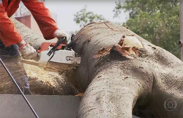 Funcionários da Prefeitura tiveram de serrar os galhos da árvore no Terminal Bandeira (Foto: TV Globo/Reprodução)