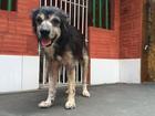 Vereadores aprovam criação de hospital veterinário em Belém