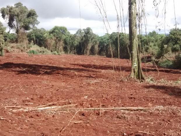 Em Espigão Alto do Iguaçu foram mais de 28 mil metros quadrados de área desmatada  (Foto: Polícia Ambiental/ Divulgação)